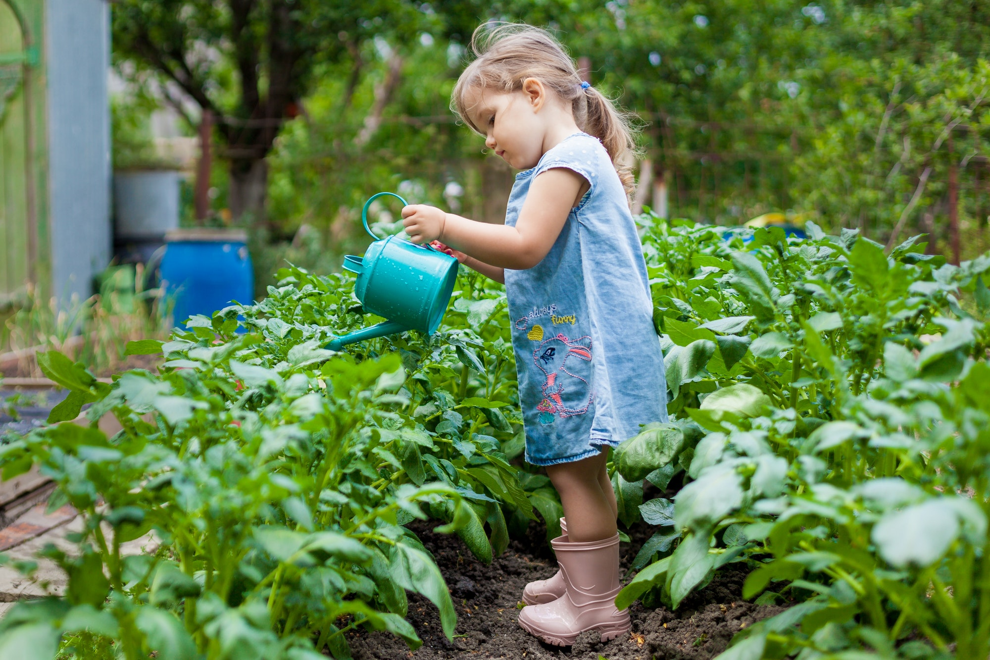 kid, plant, gardening, flower, garden, spring, little, child, nature, young, green, outdoor, care, c