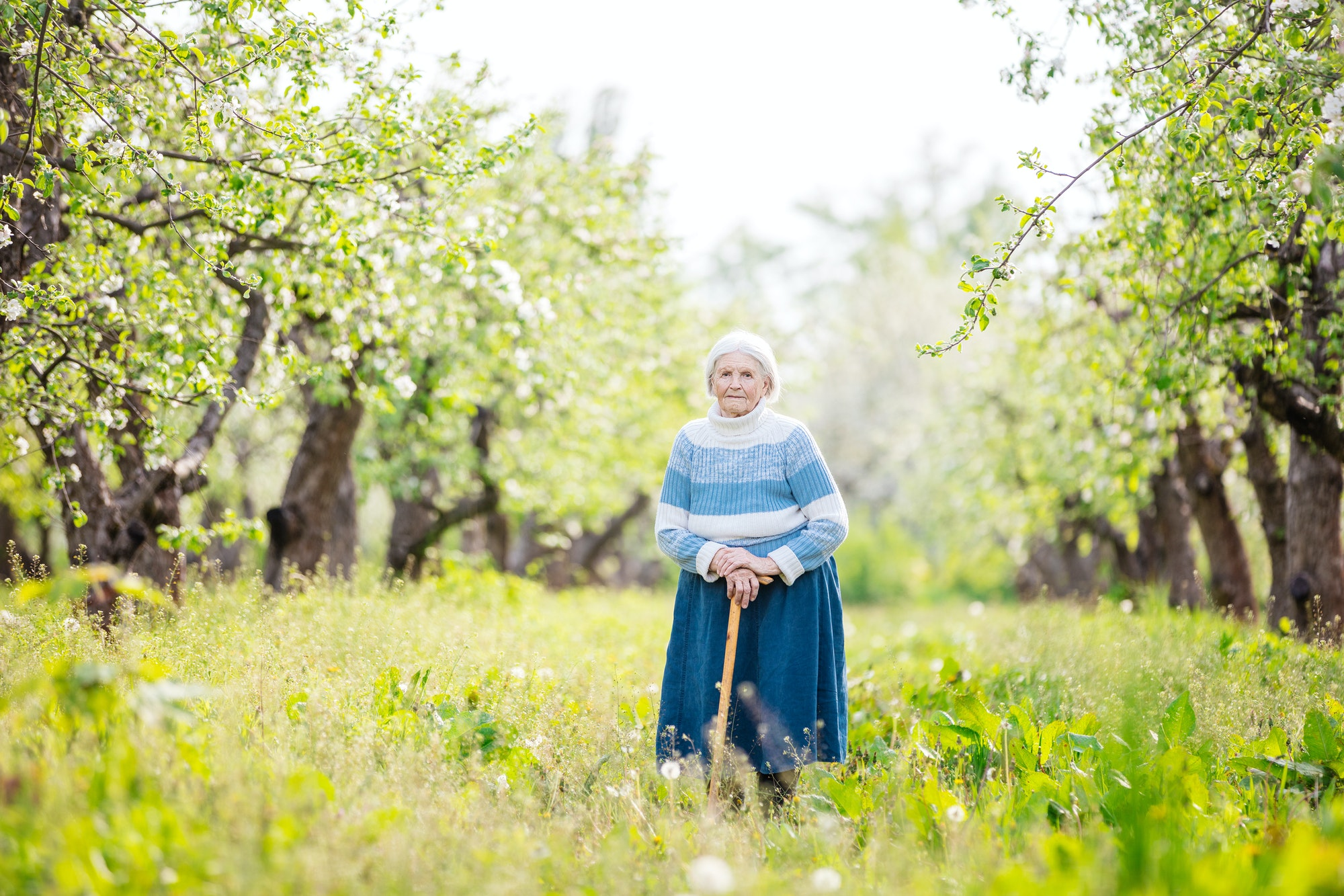 Senior woman standing in blossoming orchard